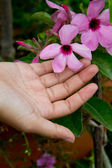 Hands that are going to pick flowers — Stock Photo