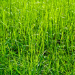 Grass and Grass — Stock Photo #8274101