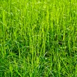 Grass and Grass — Stock Photo