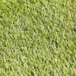 Grass and grass - Stock Photo