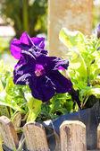Lila tropisk blomma — Stock fotografie