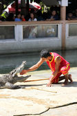 The crocodile show — Stock Photo