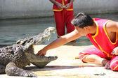 The crocodile show — Stock Photo