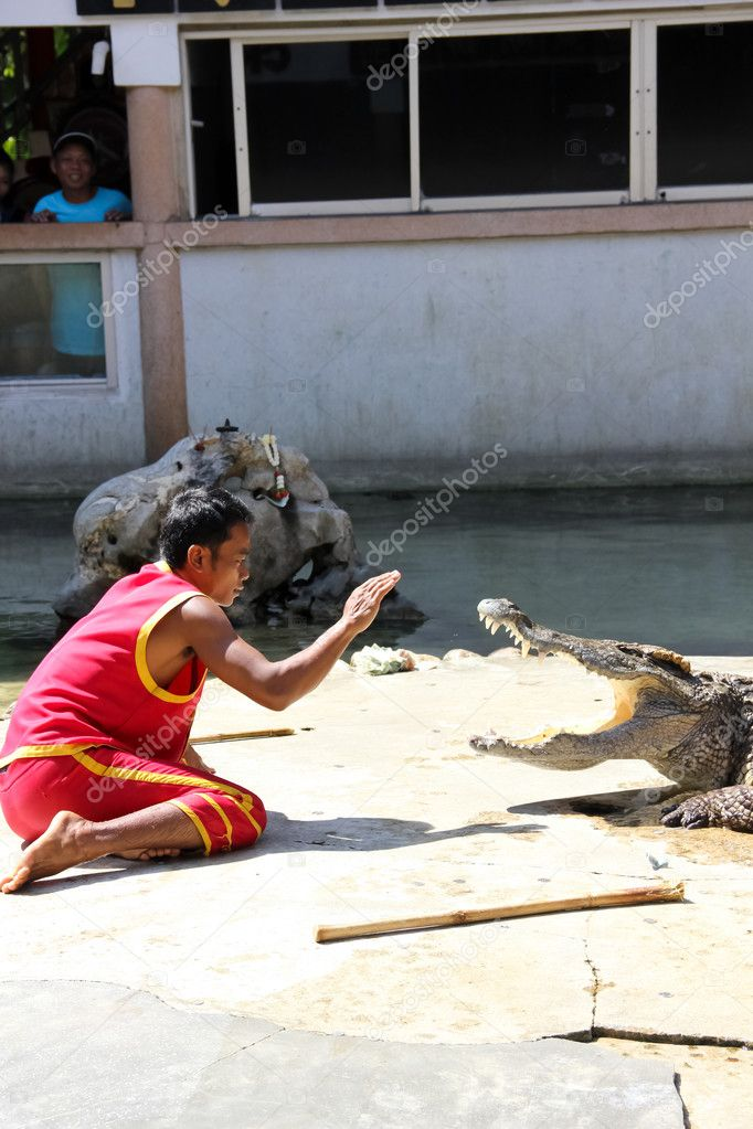 Thailand, SamutPrakang - 22 January: The zoo keeper is not a crocodile or hypnosis, which is part of The Crocodile show on January 22, 2012 in SamutPrakang, T  Photo #8825787