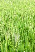 Skok na zielono — Zdjęcie stockowe