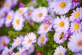 Bee on flowers — Stock Photo