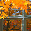 Autumn Color by the Window — Stock Photo