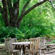 Cafeteria Tables under Big Tree — Stock Photo