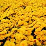 campi di fiori autunnali — Foto Stock