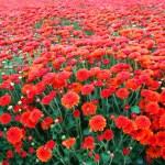 Campo di fiori autunnali — Foto Stock