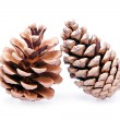 Two isolated pinecones — Stock Photo