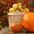 Pumpkins — Stock Photo #8138702