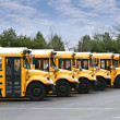 Stock Photo: Line of school buses