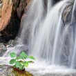 Beautiful waterfall — Stock Photo #8138962