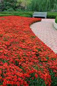 Fall Color at the Garden — Stock Photo