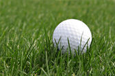 Golf ball in the field — Stock Photo