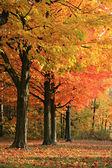 Colorful Autumn Scene — Stock Photo