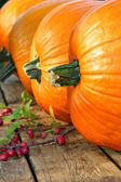 Row of big pumpkins — Stock Photo