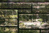 Fungus Growing Stone Wall — Stock Photo