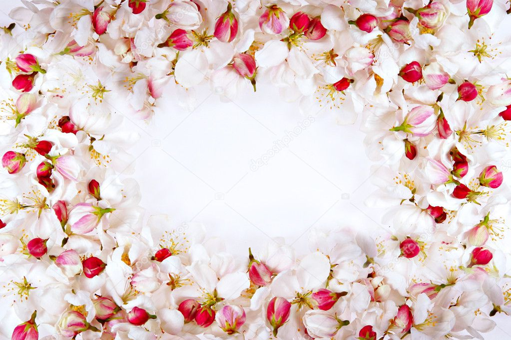 Spring cherry blossom petals frame perfect for background — Stock Photo #8138133