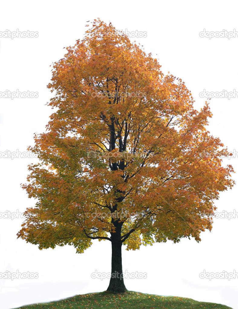 Isolated Colorful Big Lone Maple Tree on Hill Top — Stock Photo #8138505