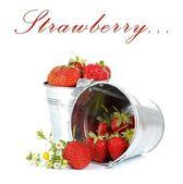 Buckets of strawberries — Stock Photo