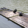 Cormorants and bamboo raft — Stock Photo #10032953