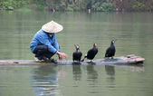 A Chinese fishermen and cormorants — Stock Photo