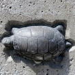 Постер, плакат: Toronto Lake Humber Bridge turtle 2011