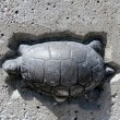 Toronto Lake Humber Bridge turtle 2011 - Stock Photo