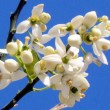 Tel Aviv Orange Blossom 2012 — Stock Photo #10516744