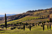 Tuscany Val d'Orcia Road of Cypress HDR — Stock Photo