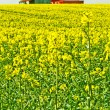 Mustard with old farmhouse — Stock Photo