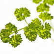 Parsley — Stock Photo #10406132