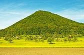 Landscape in spring — Stock Photo