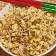 Soybean sprout - Stock Photo