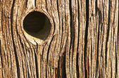 Knothole — Stock Photo