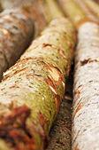 木材木材 — ストック写真