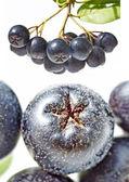 Chokeberry,Aronia melanocarpa — Stock Photo