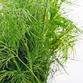 Bundle of green fennel — Stock Photo