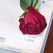 Rose on a calendar — Stock Photo