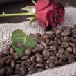 Red rose on coffee beans — Stock Photo #9514682