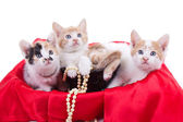 Little kittens — Stock Photo