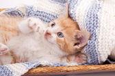 Little kitten playing in wool — Stock Photo