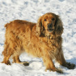 Dog on snow - Stock Photo