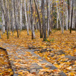Stock Photo: Fallen leaves