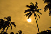 Silhouettes of Palm trees against the sun — Stock Photo