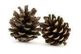 Two pine cones — Stock Photo