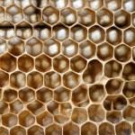 Bee honungskakor — Stockfoto