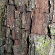 Bark tree with moss — Stock Photo